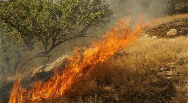 باز هم آتش سوزی درمنطقه پلنگ دره/ آتش مهار شد