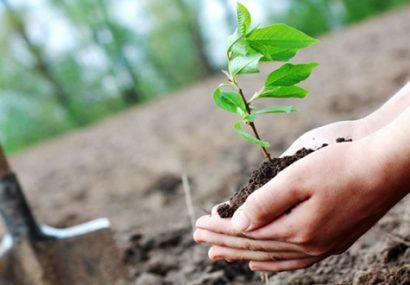 کاشت ۲۴ هزار اصله درخت در پردیسان