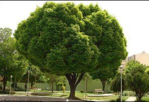 کاشت ۱۷ گونه جدید درخت در شهر قم